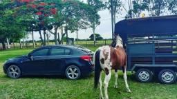 Título do anúncio: Cavalo Paint Horse