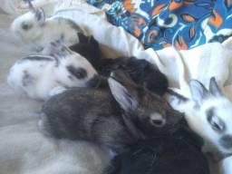 Filhotes de coelho com lebre