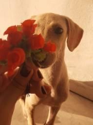 Título do anúncio: Cachorrinho macho para adoção