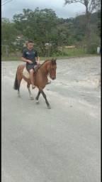 Título do anúncio: Vendo cavalo criolo