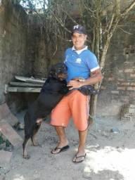 Rottweiler macho p/cruzamento