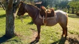 Vendo égua com documento