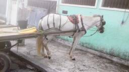 Cavalo+carroça