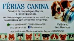 Hotel para cães em Brotas ? SP