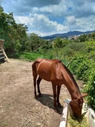 Cavalo alazão