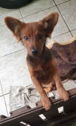 Cachorrinho porte pequeno para doação