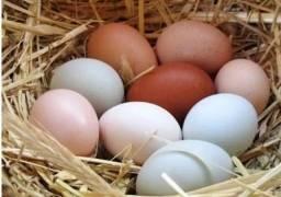 Título do anúncio: Ovos ferteis