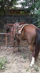 Doma de cavalos e treinamento de laço