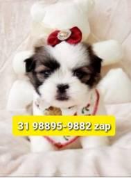 Título do anúncio: Cães Filhotes Belos BH Shihtzu Maltês Poodle Lhasa Beagle Basset Yorkshire