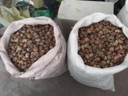 Vendo 134 kg de castanha com casca