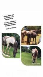Cavalo e Egua