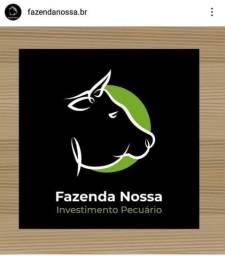 Investimento Agropecuário