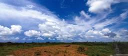 Título do anúncio: Arrendamento 9102 ha S.C.Xingu MT.