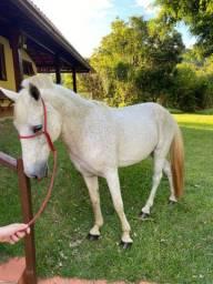 Cavalo Branco Marcha Batida