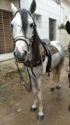 Título do anúncio: Cavalo mestiço de marga largar