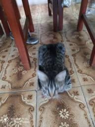 Doação gatinha femea.
