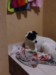 Tô doando minha cachorra