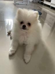 Vendendo Lulu c 3  meses