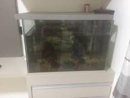Aquario de 150 litros