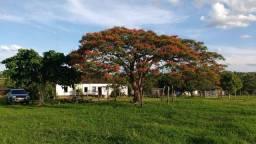 Fazenda em Buritizeiro