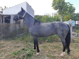 Égua Moura
