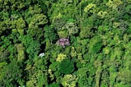 Mata pra reserva ambiental