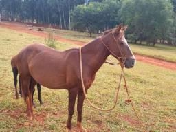 Vendo egua parida de 5 a 6 anos potra esta com três meses  4 mil ou troco por outros