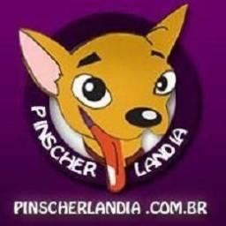 Pinscher Miniatura é na Pinscherlandia o Mundo dos Pinschers