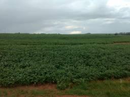 Fazenda Arrendamento Regiao Central indo p Noroeste do Pr 450 alq