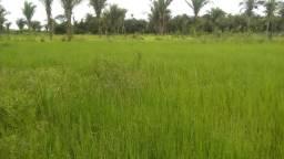 Fazenda de 100 hectares em Santa luzia do parua - Maranhão