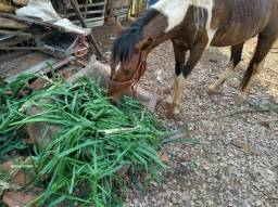 Vendo cavalo e poney