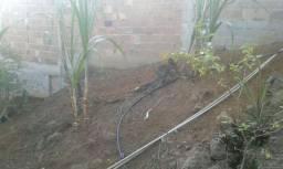 Limpeza de quintal capina