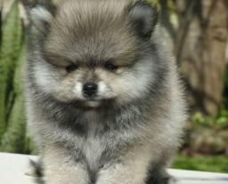Vendo esse baby luluzinho mini