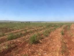 Vendo Fazenda de Cana de 949 Alqueires na Região de Brotas/SP