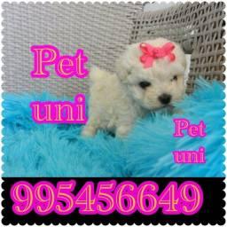 Título do anúncio: Poodle  micro procedência realize seu sonho