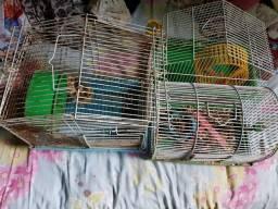 Gaiolas para roedores