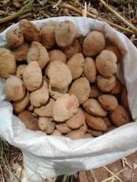 Vende se sementes de baru