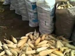 Debulhamos seu milho