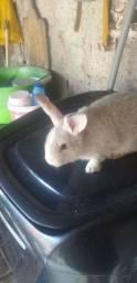 Lindos e amorosos, filhotes de coelhos.