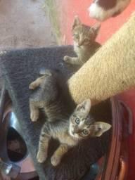 Gatinhas para adoção!