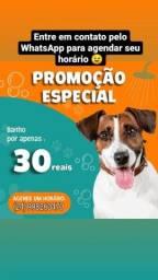 Título do anúncio: Banho em cachorros