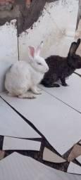 Título do anúncio: Vende  um casal de coelho