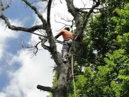 Título do anúncio: Corte e poda de árvores
