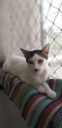 Adoção de gato macho resgatado