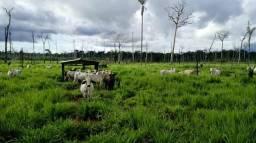VENDO Fazendas,Sítios e chácaras