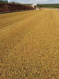 Fazenda em guapé (M.G) 125 alqueires 25.000.000.00
