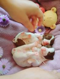 Se apaixone por essas fofuras de pinscher mini