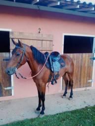 Cavalo Marcha Picada, Serve para qualquer cavaleiro(a)!!! (Leia o anúncio)