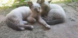 Adoção responsável (Gato Fêmea) 3 meses