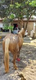 Título do anúncio: Vendo cavalo de esteira